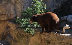 Unethical practices fuel captive wildlife industry