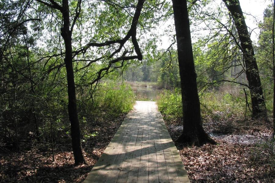 Out of the five different trails in the Houston Arboretum, two of them lead to the meadow deck that overlooks a pond.